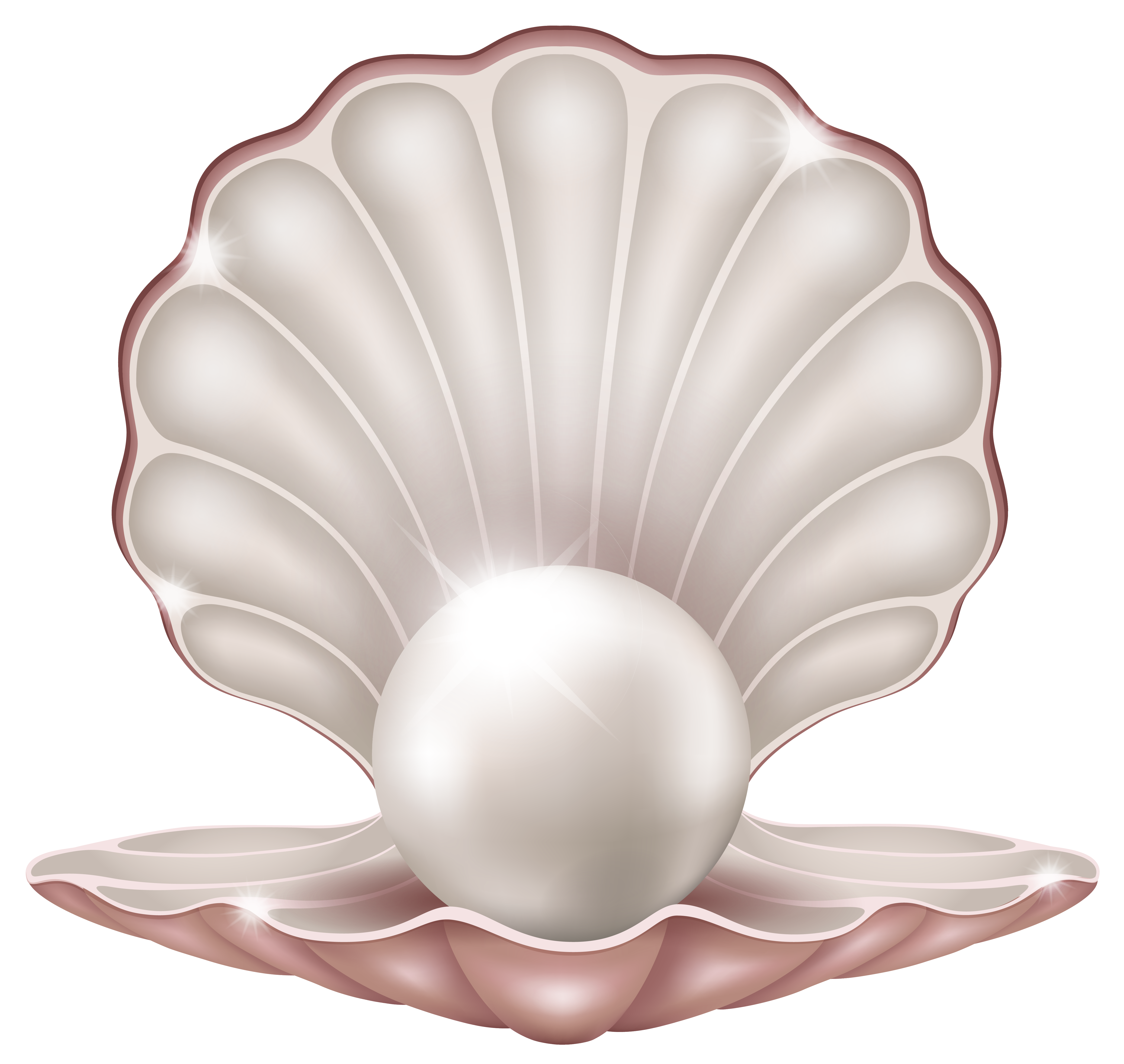 Pearls clipart sheel. Beautiful clam with pearl