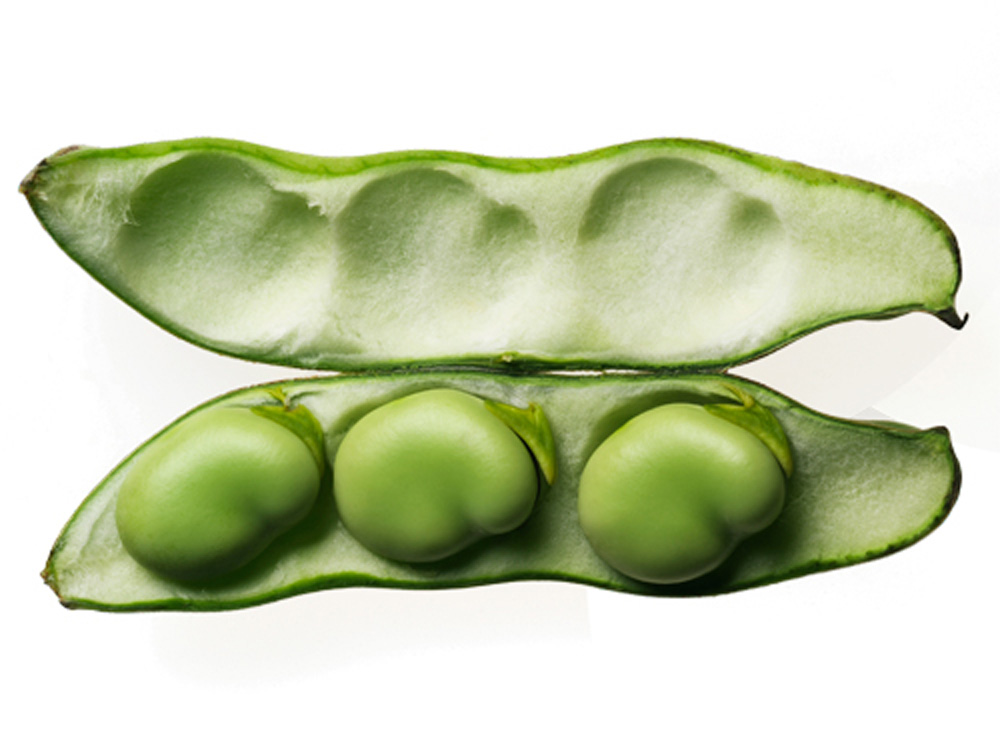 peas clipart broad bean
