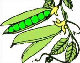Plants clipart bean plant. Green movieweb
