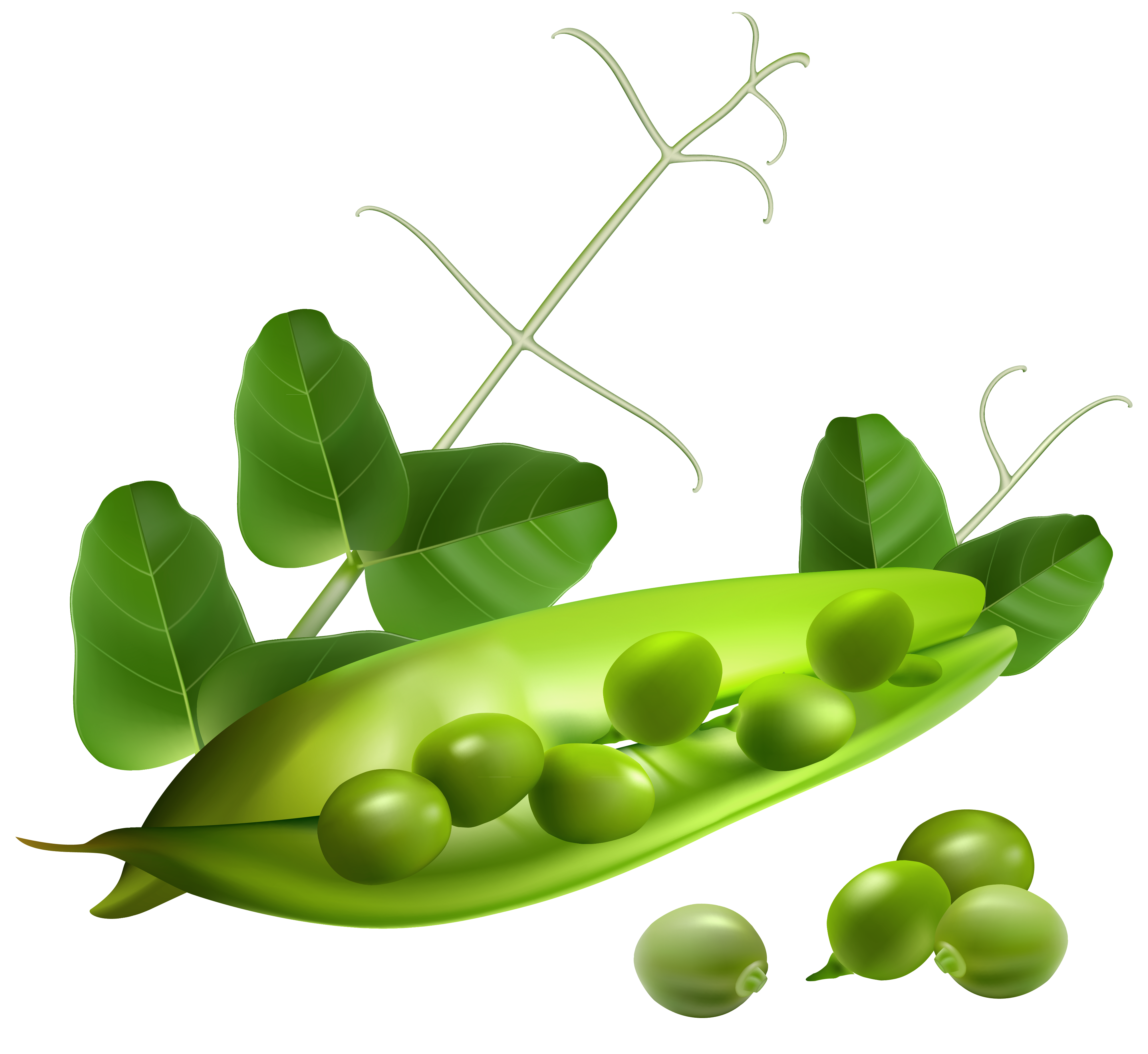 Carrot Pea Transparent Png Clipart Free Download Ya Webdesign