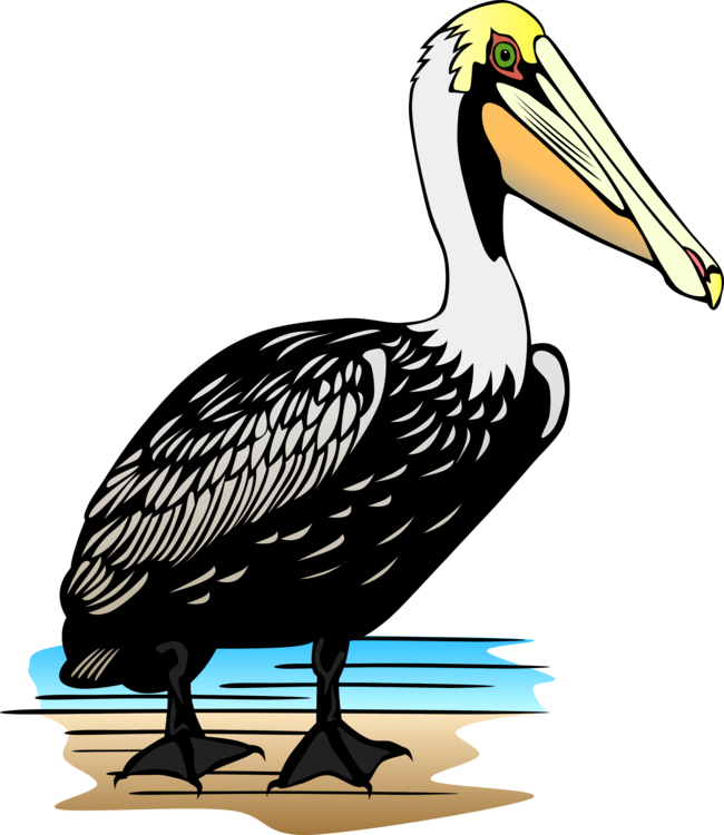 Louisiana drawing brown pelican. Download cartoon free commercial