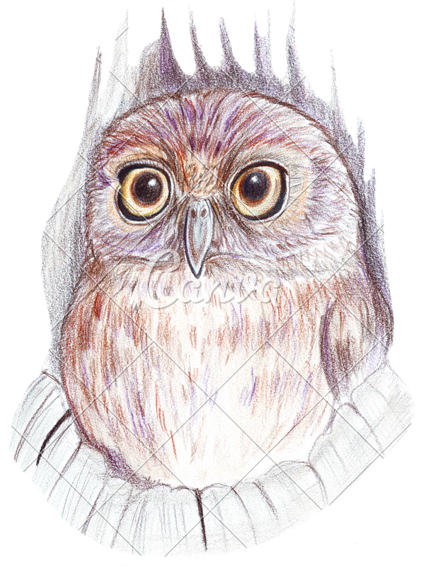 Pencils drawing beach. Hand colored owl photos
