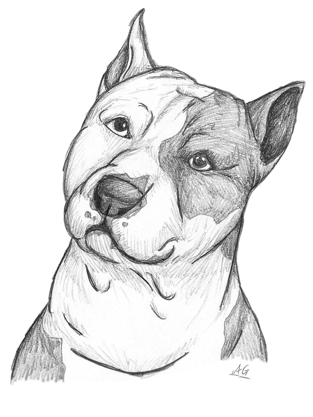 Terrier drawing pencil. Pin by sboyers on