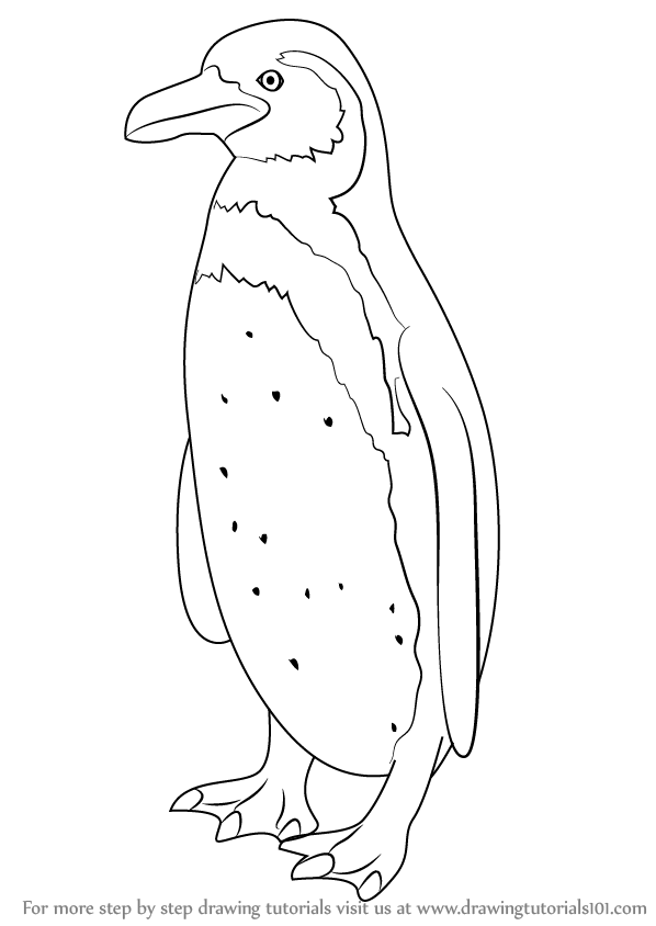 Penguin clipart humboldt penguin. Learn how to draw