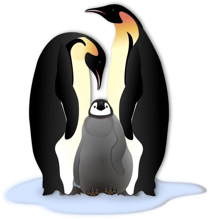 Penguin clipart realistic. Pinguin familie medium image