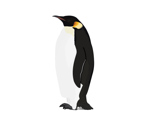 Penguin png transparent background. Download free image with