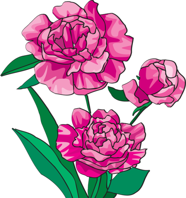 Peony clipart simple. Free peonies flower cliparts