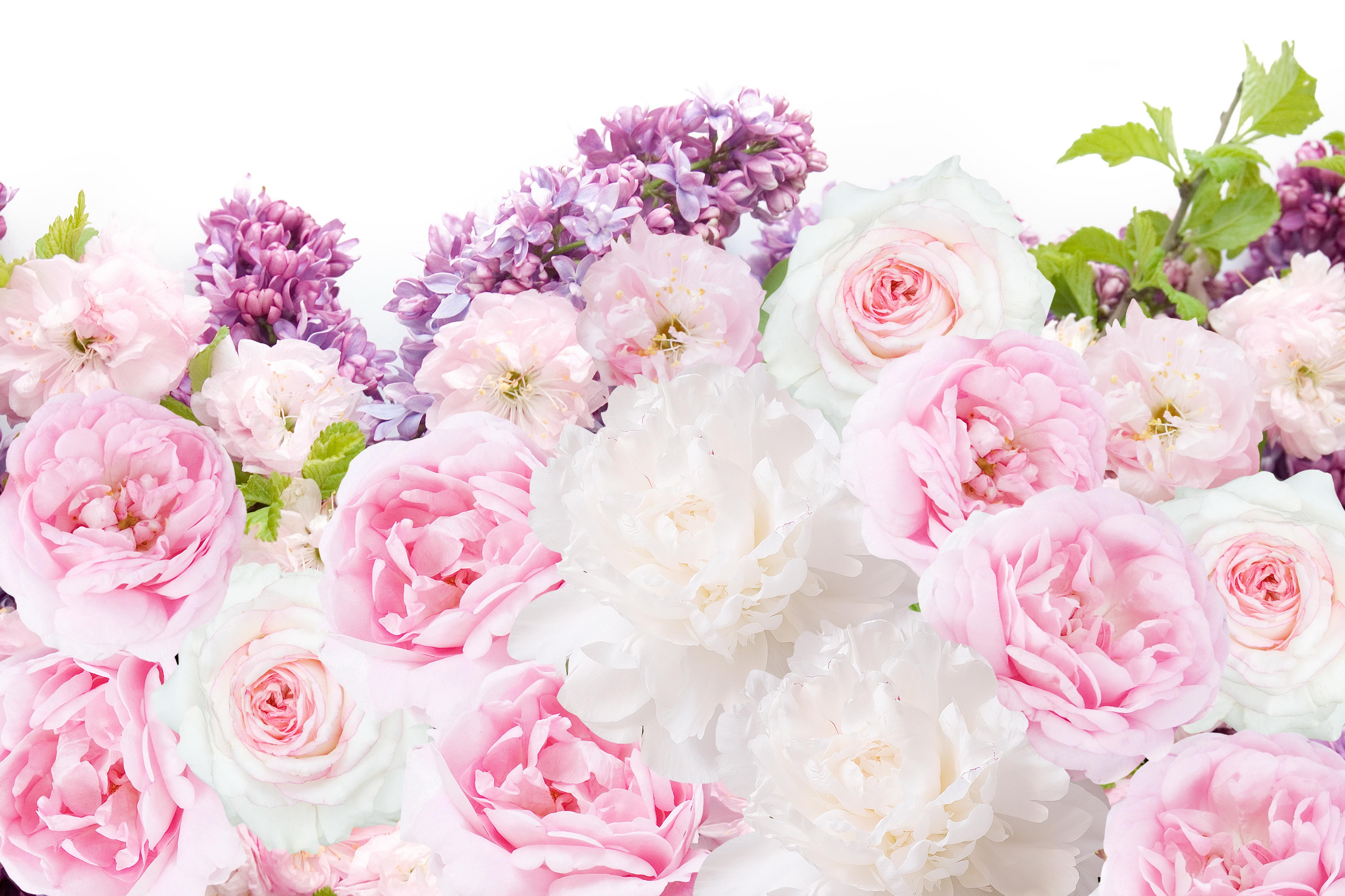 Peonies Clipart Vase Wallpaper Picture 162241 Peonies Clipart