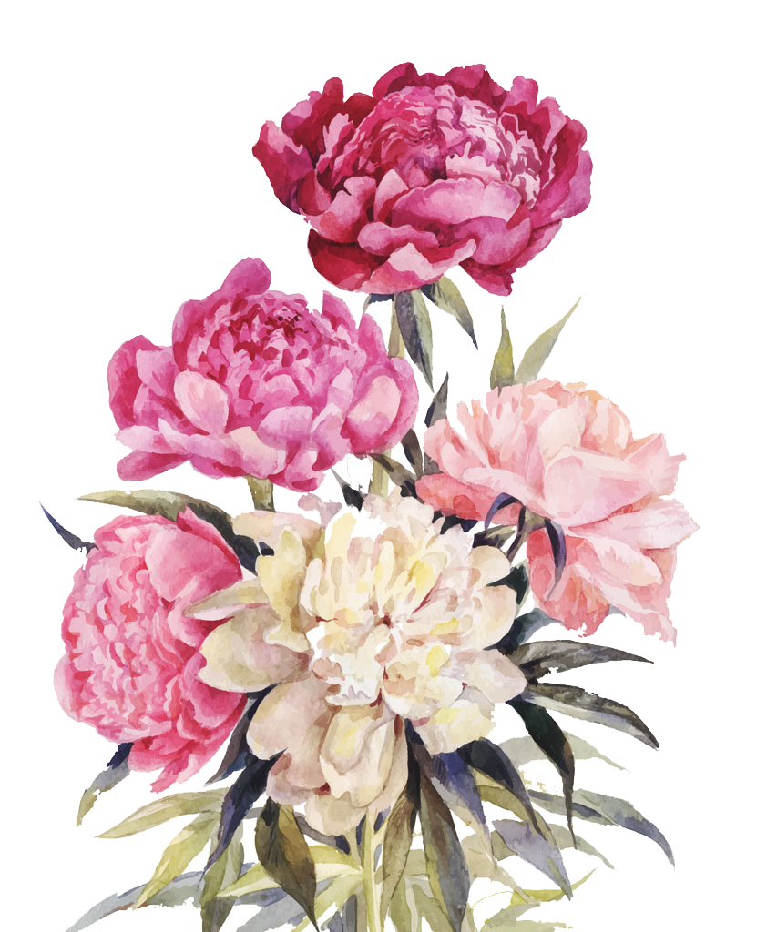 Peony bouquet png. Flower illustration pink and