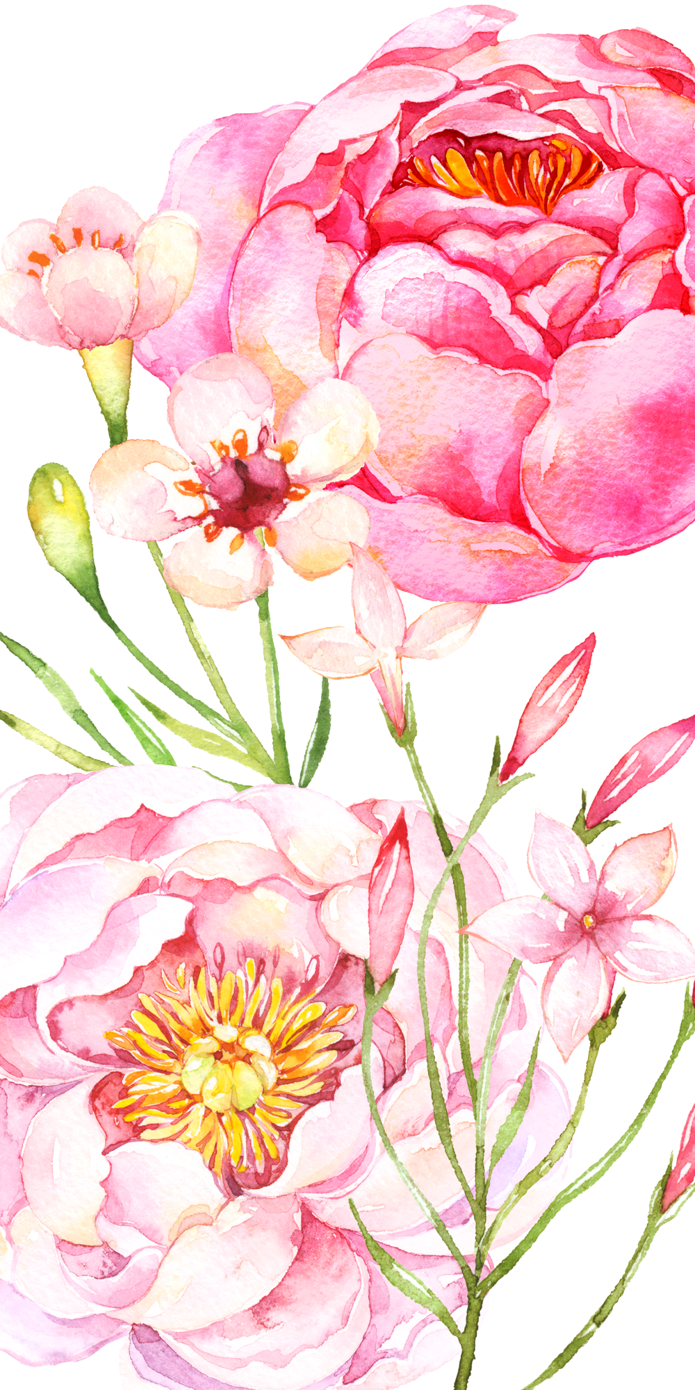 Peony clipart floral arch. Pink peonies casetify iphone