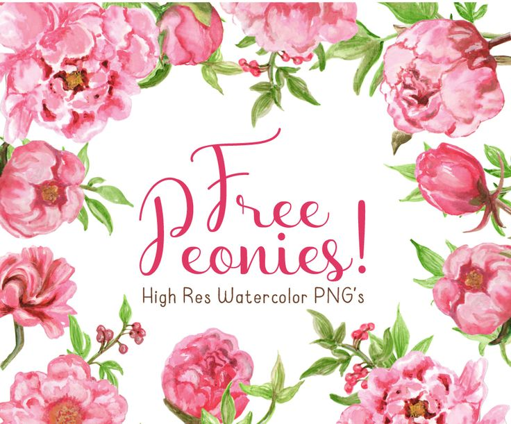 Peony clipart floral arch. Best graphic freebies