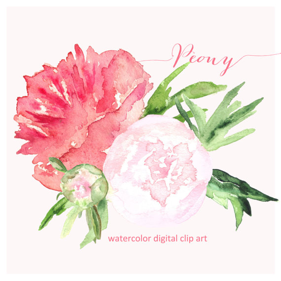 Peony clipart hand drawn. Watercolor clip art sales