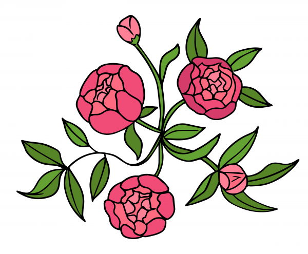 Peony flower graphic color isolated sketch illustration vector.