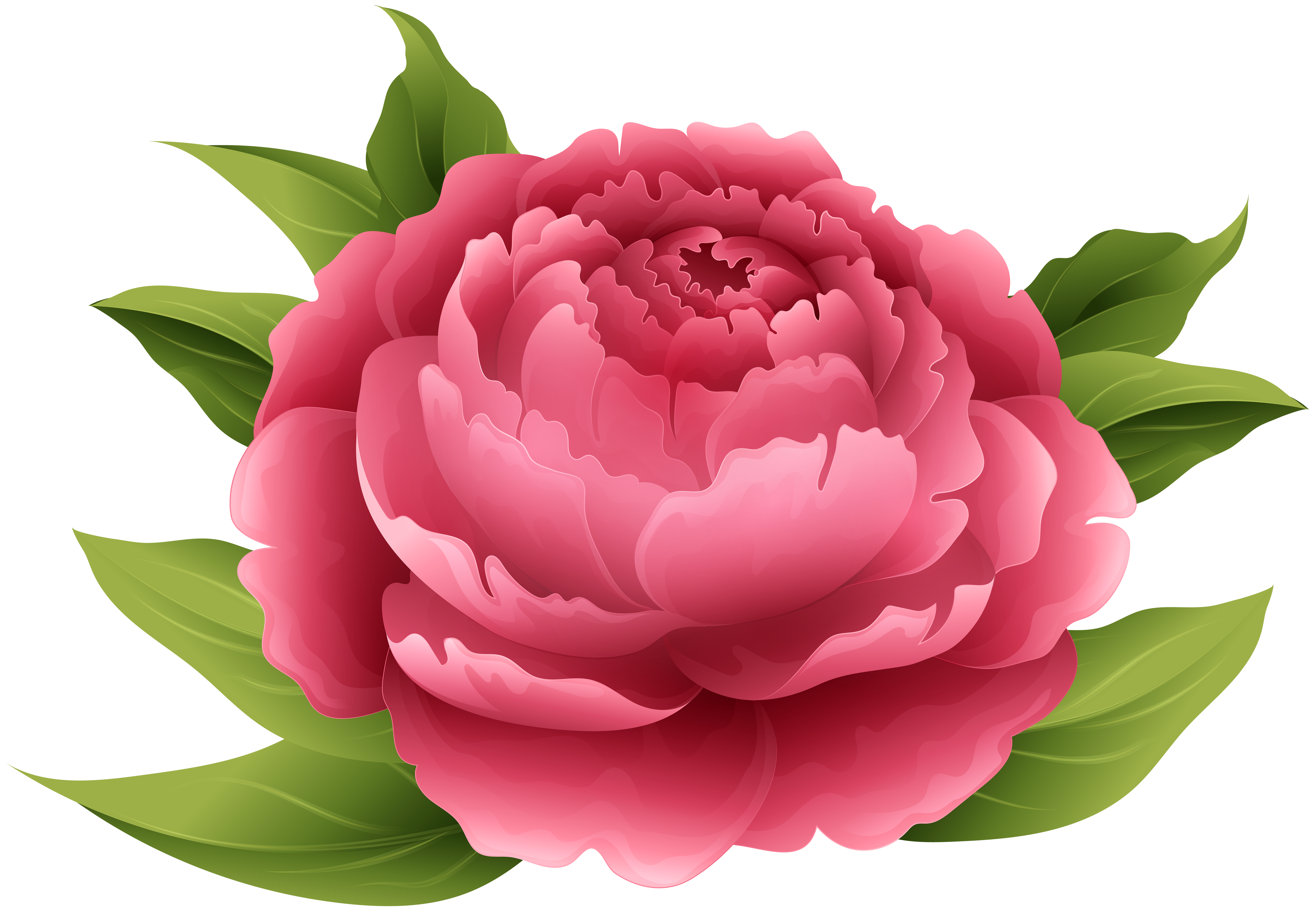 Peony flower png. Red clip art image