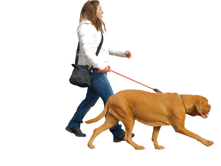 People walking dogs png. Royal dog gallery top