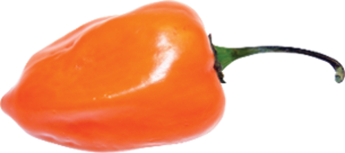Pepper transparent habanero. Pasumadre hot sauce the