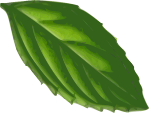 Peppermint drawing mint leaf. Clip art at clker