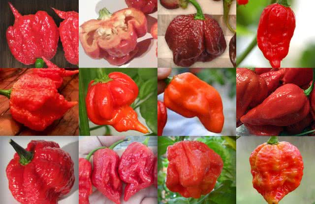 Peppers clipart ghost pepper. Top hottest in the