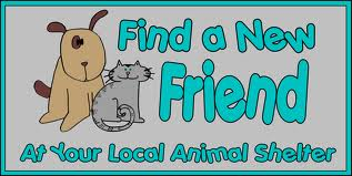 Pet clipart animal shelter. Roger biduk list of