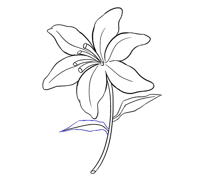 Petal drawing. How to draw a