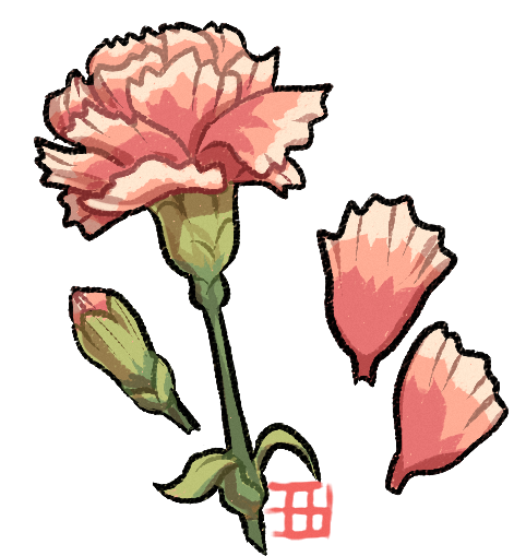 Petal drawing carnation. Draw a flora by