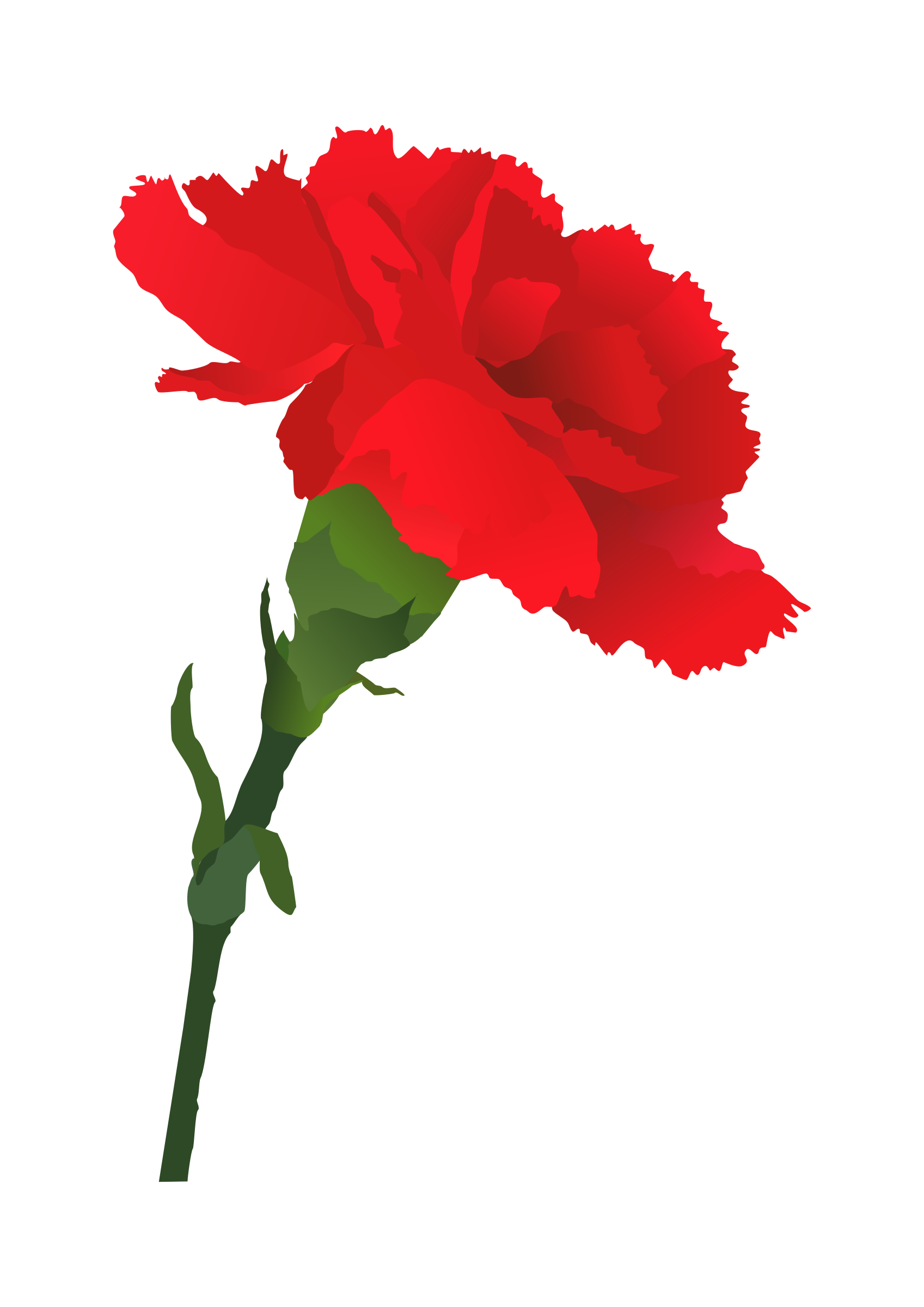 Petal drawing carnation. Red displaying images for