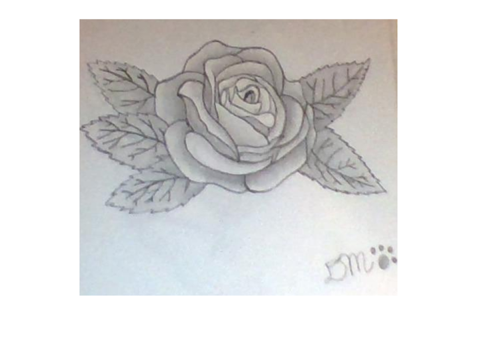 Drawing realism bad. Realistic rose by dolfinr