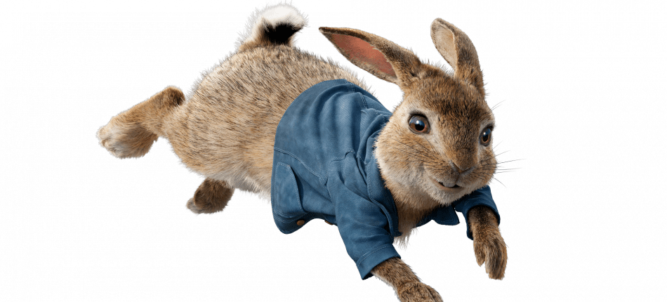Peter rabbit png. Images in collection page