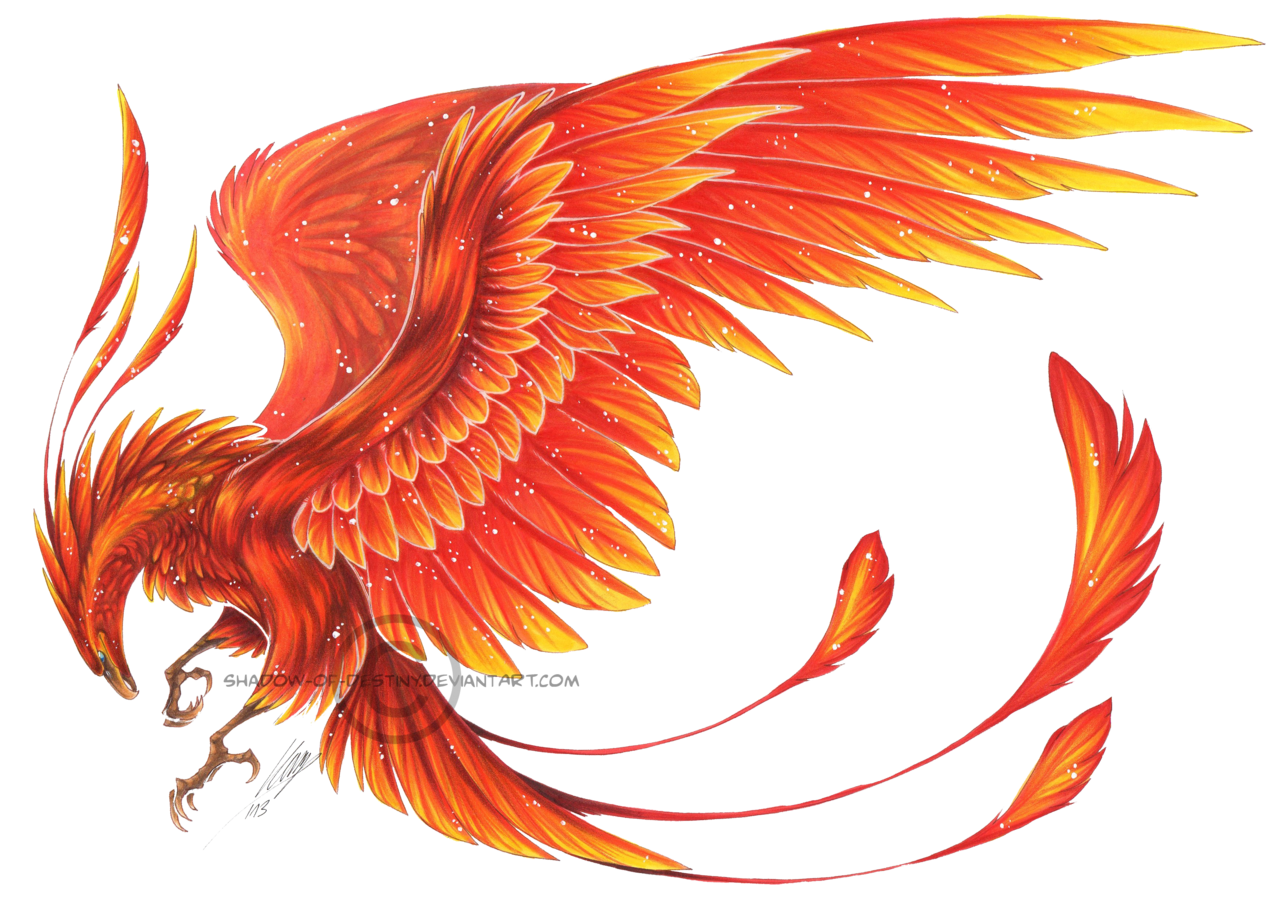A golden red bird. Drawing phoenix harry potter vector royalty free