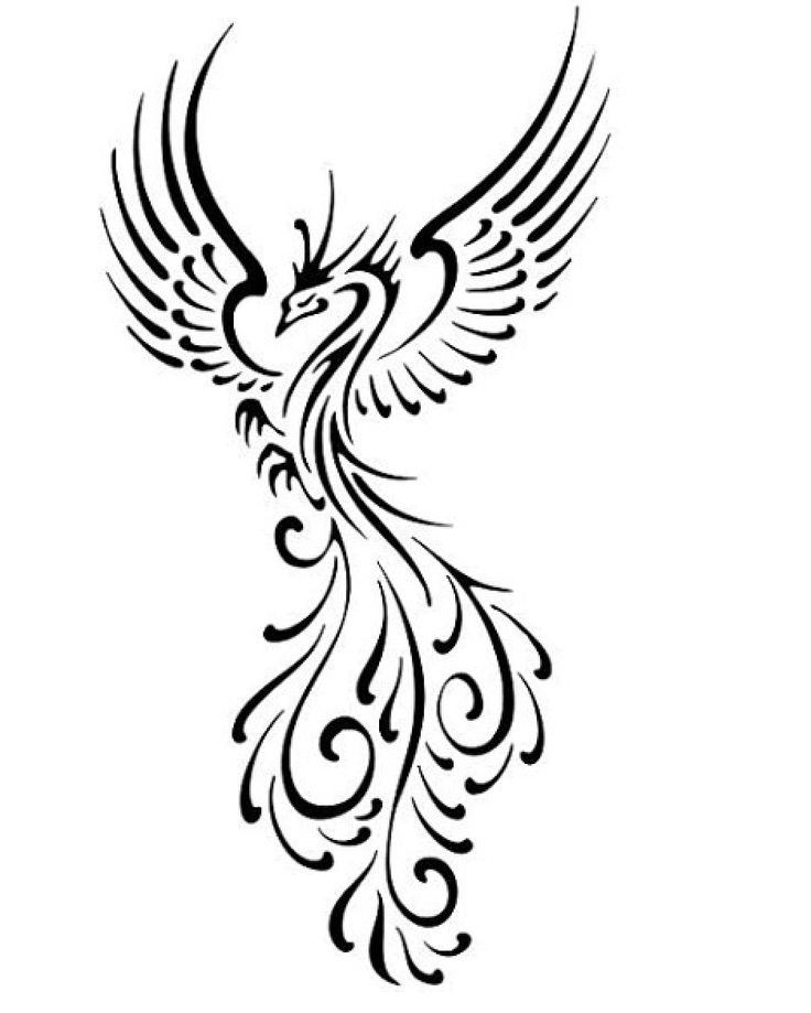 Phoenix clipart phoenix chinese. Line drawing at getdrawings
