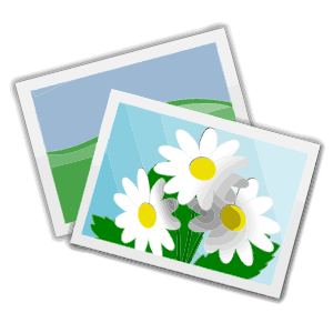 Photos with nature panda. Photo clipart picture library