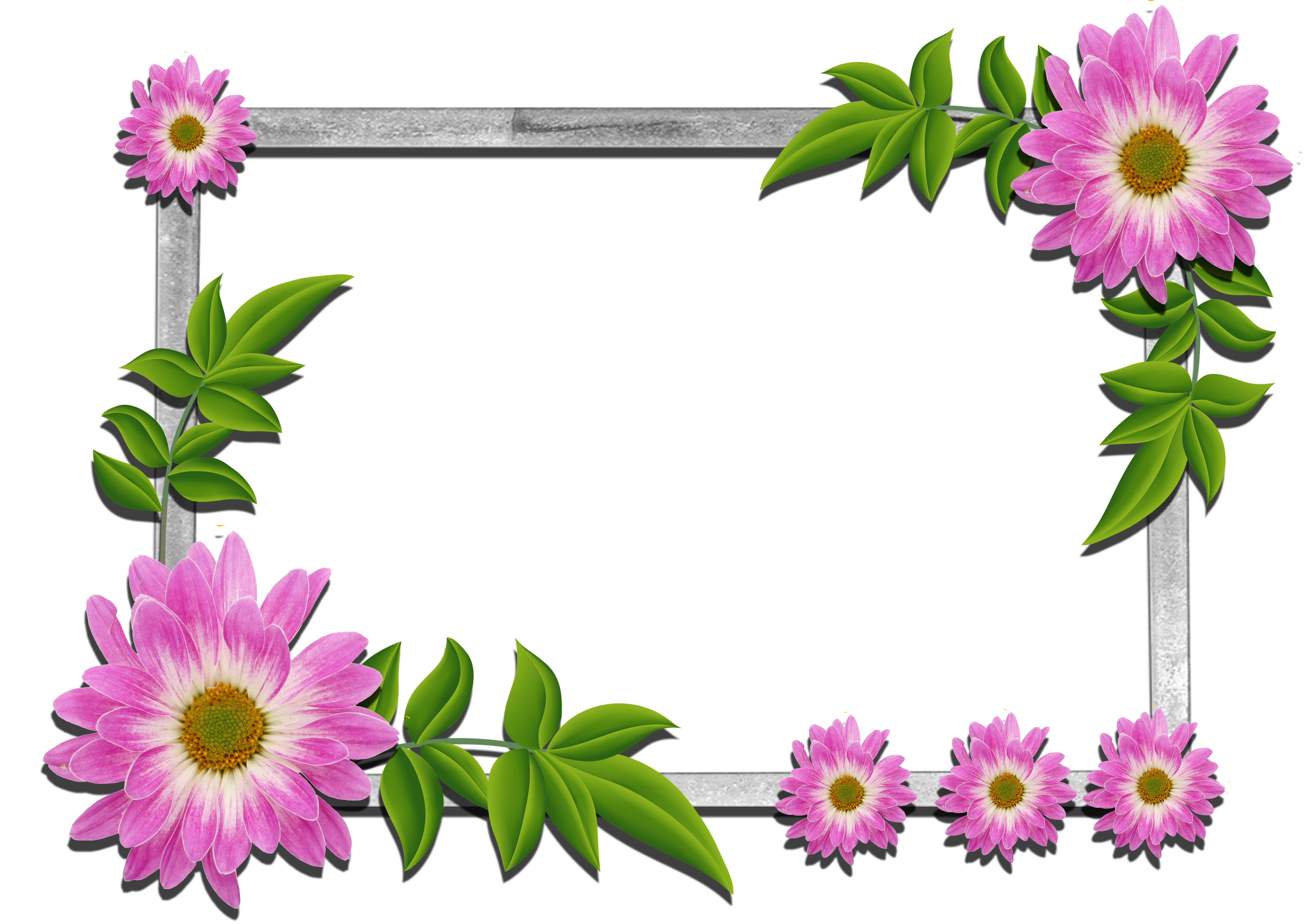 Flowers gallery yopriceville high. Daisy clipart frame svg free library