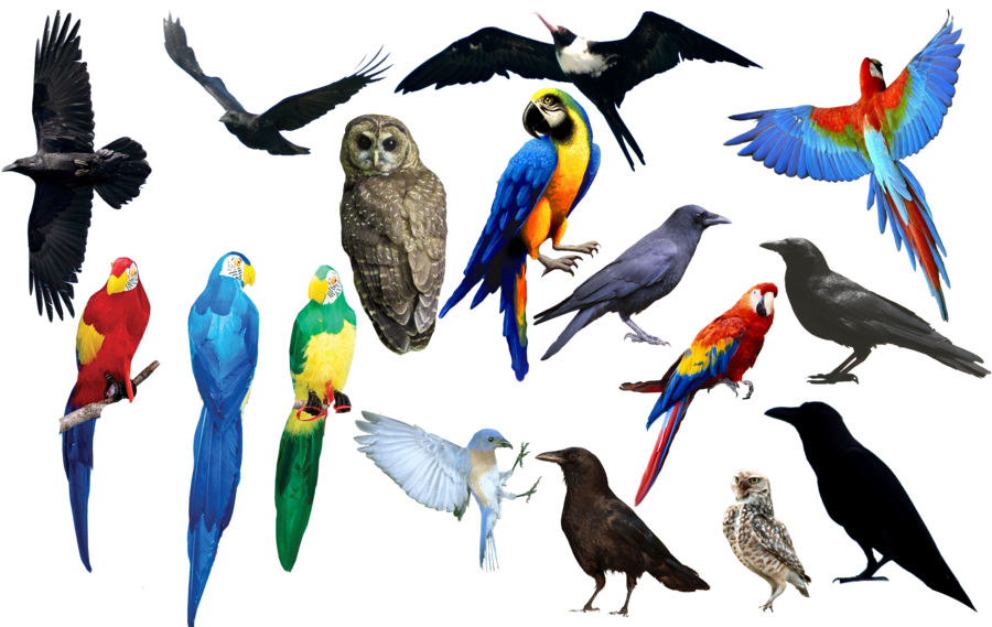 Photo png format. Bird by chimonk on