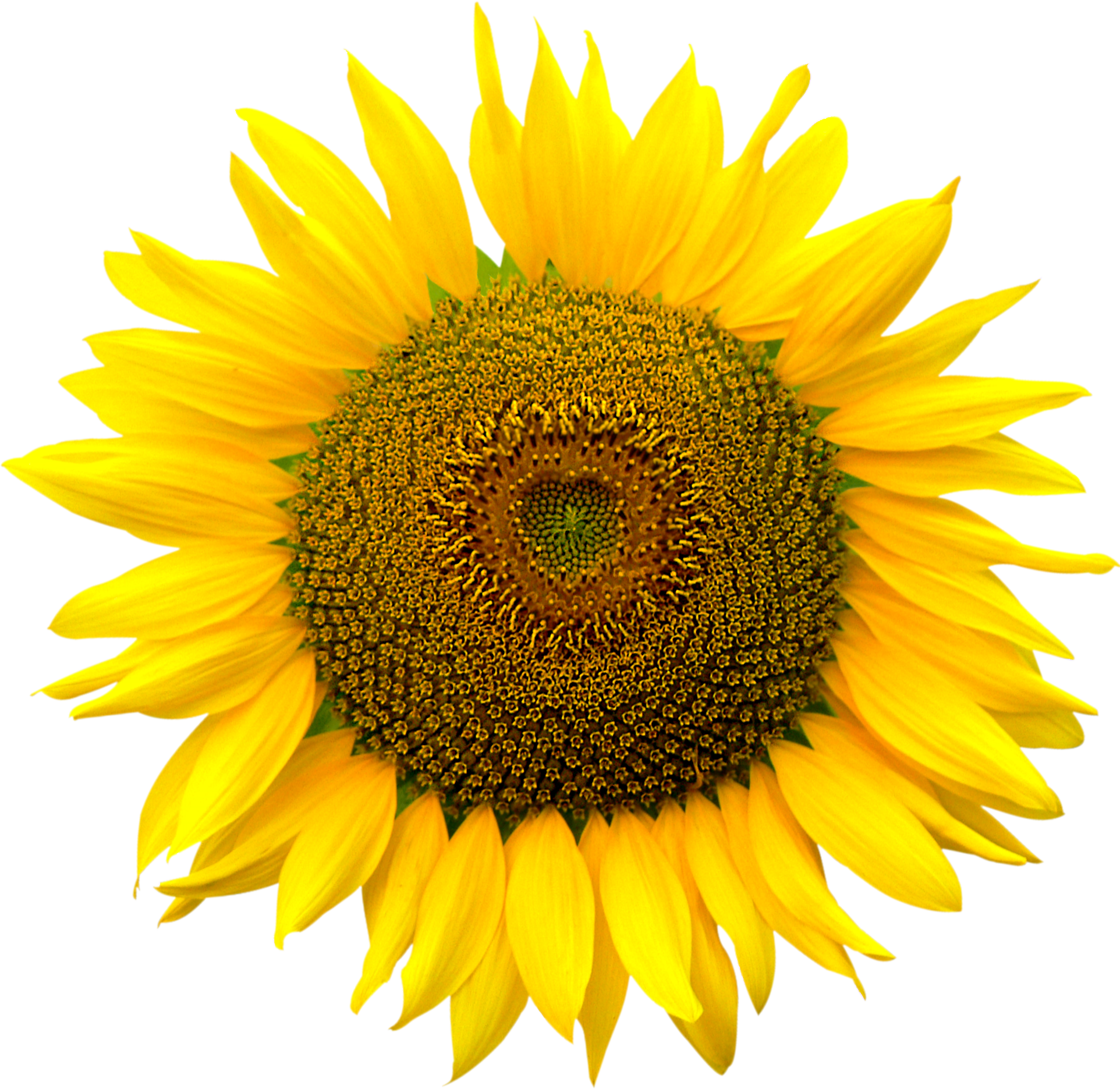 Png format images. Sunflower heart inside file
