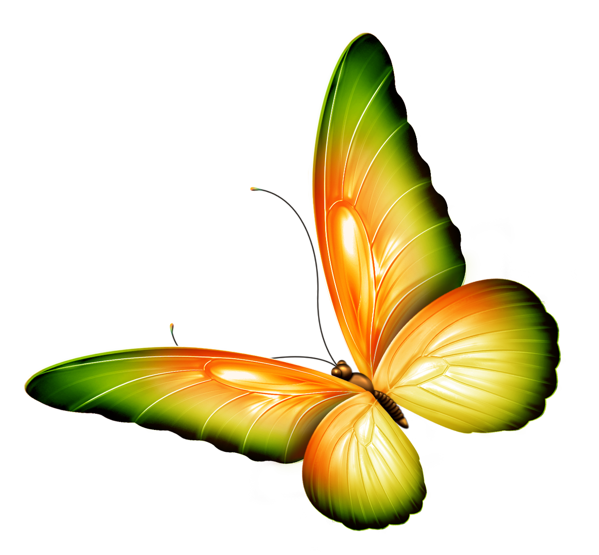 Photoshop png transparent background. Yellow and green butterfly