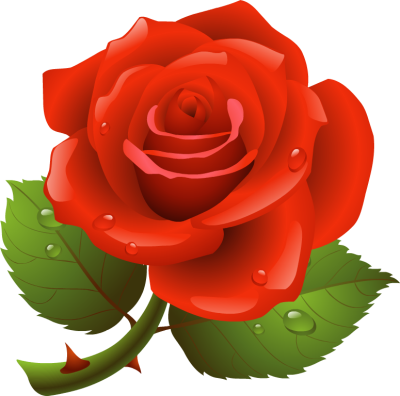 Rose clipart. Free cliparts download clip