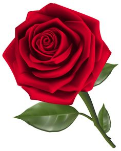 Picture clipart rose. Roses red with bud