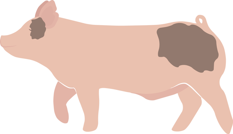 Pig butt png. Freebies ladies agriculture magazine
