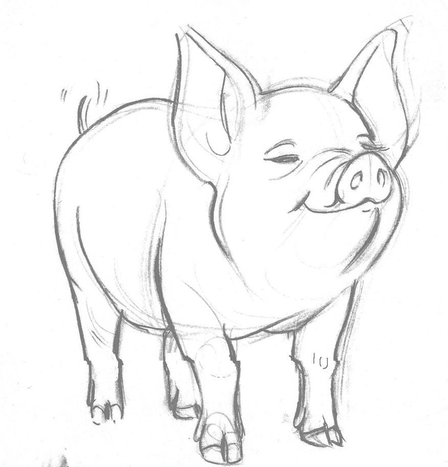 Pig clip art realistic. Drawing graphics and objects