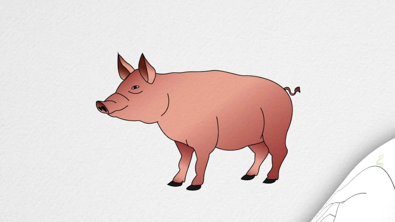Drawing images at getdrawings. Pig clip art realistic banner freeuse download