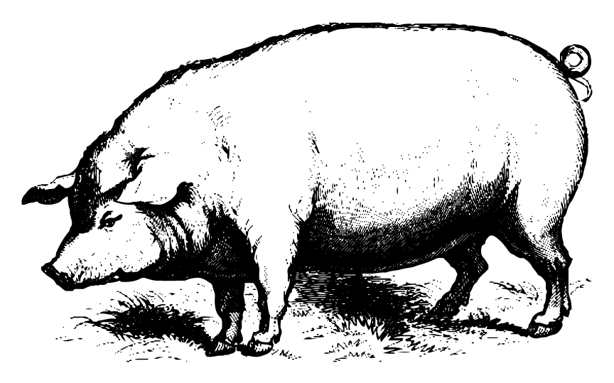 Slop shoppe slopshoppepigbigpng. Pig clip art realistic picture royalty free stock