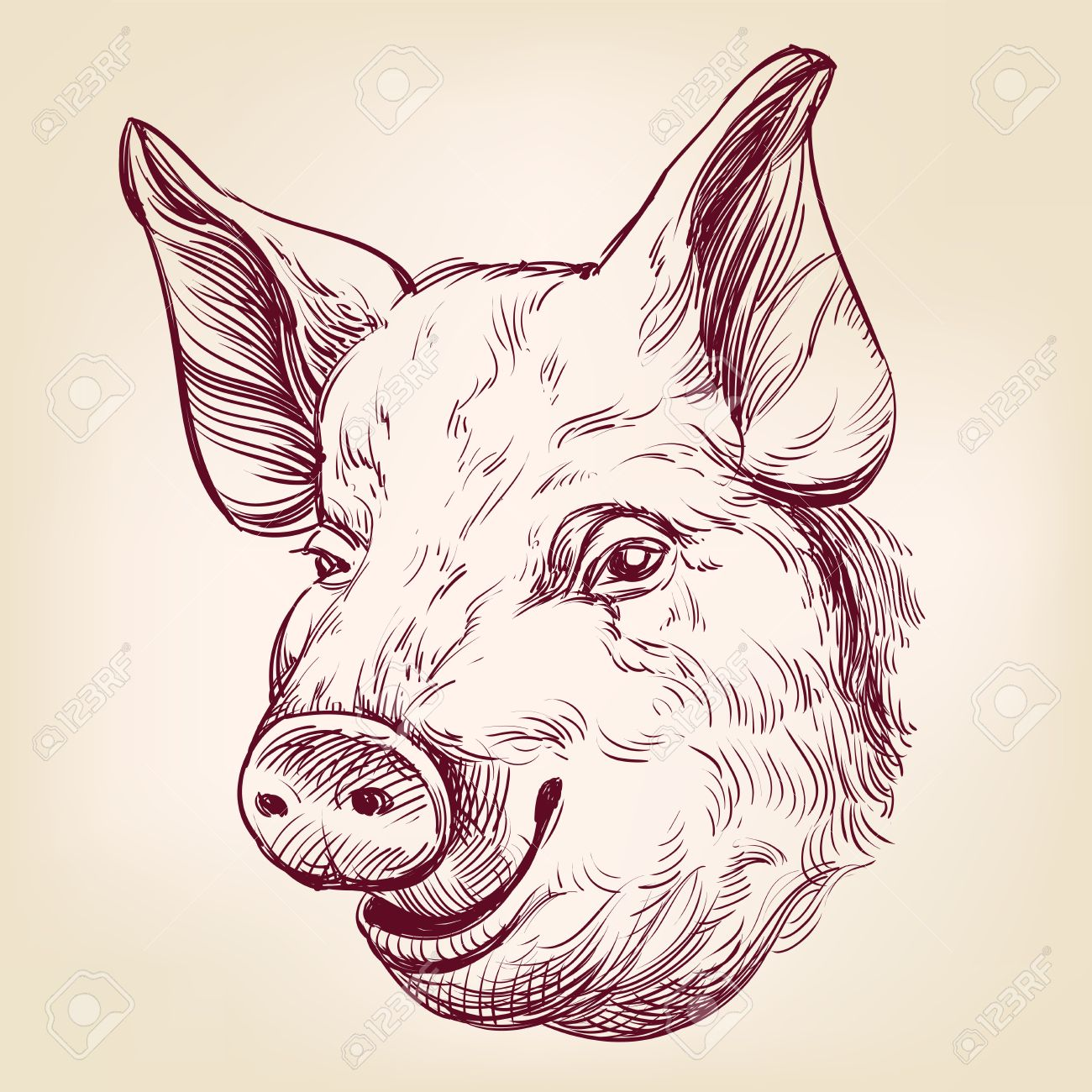 Pig clip art realistic. Head drawing at getdrawings