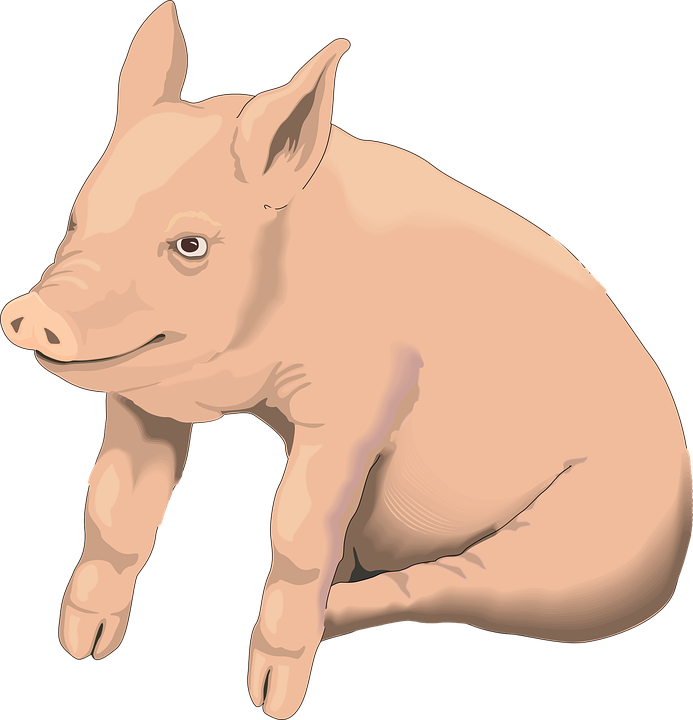 Pig clip art realistic. Vector free group with