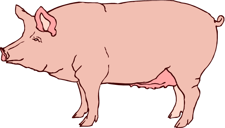 Pig clip art realistic. Pigs might fly daggie