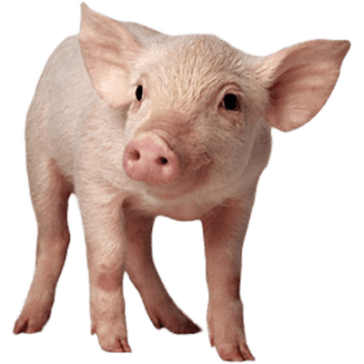 Baby sitting png stickpng. Pig clip art transparent background jpg freeuse library