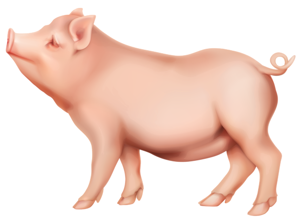 Png image gallery yopriceville. Pig clip art transparent background banner free library