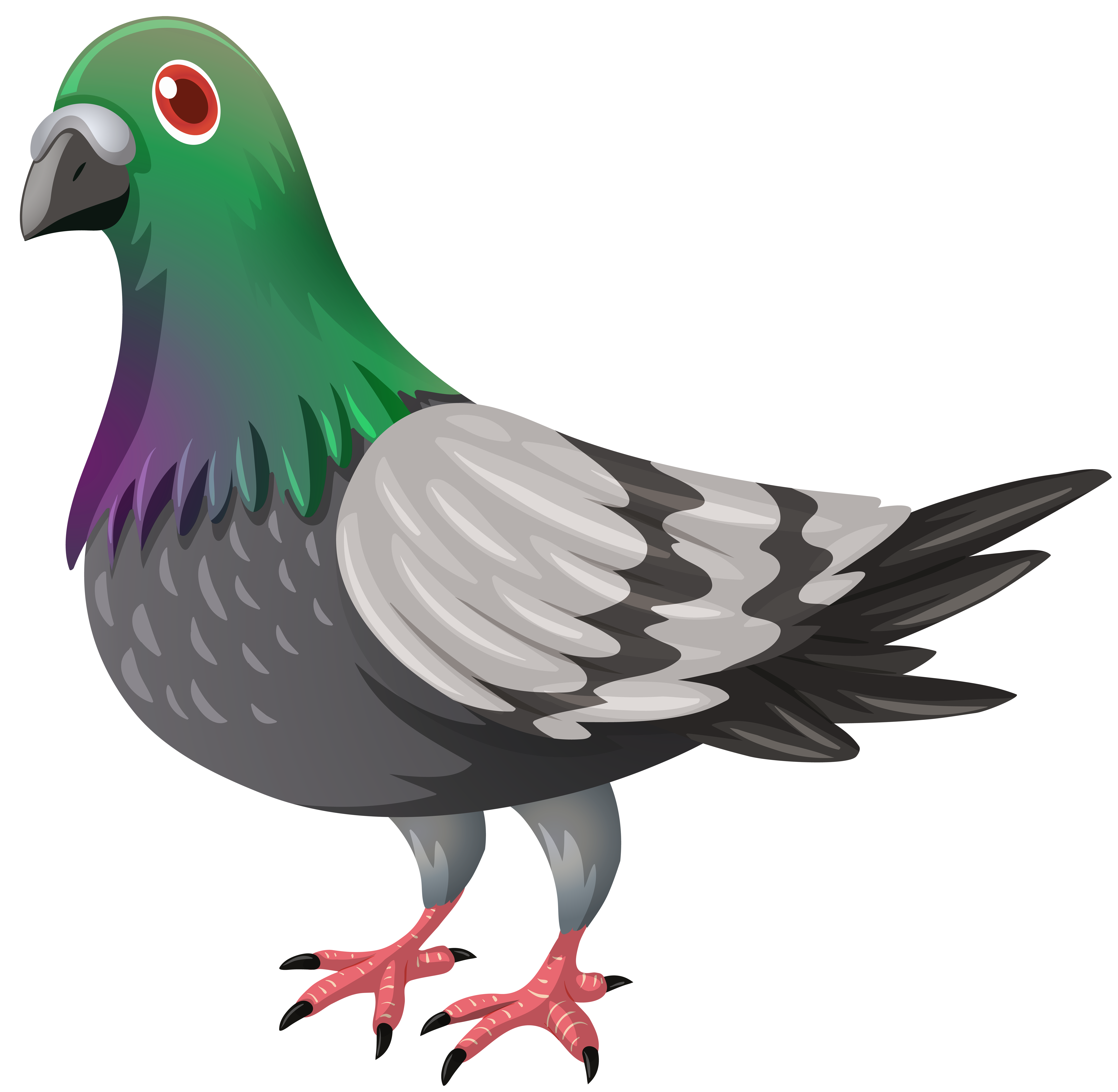 transparent feathers pigeon