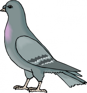 Pigeon clipart cartoon. Kevin cliparts zone