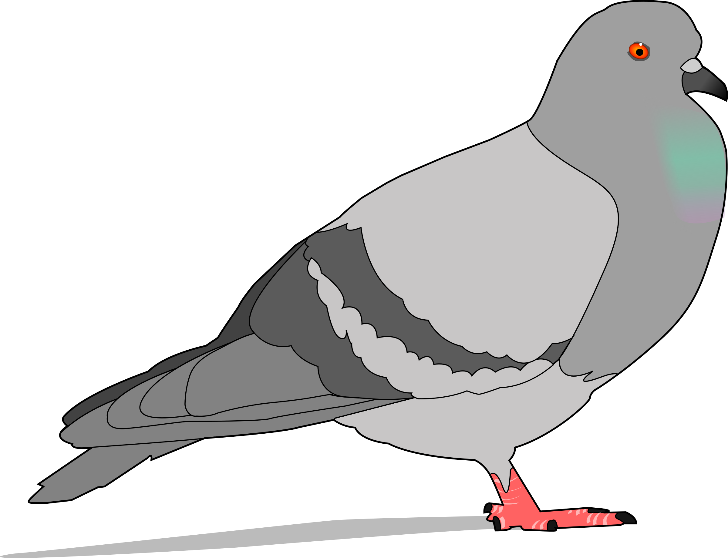 Big image png. Pigeon clipart pigen png library stock