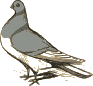 Free cliparts download clip. Pigeon clipart pigen clipart black and white stock
